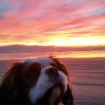 South-Brighton-Holiday-Park-Sunset-Dog